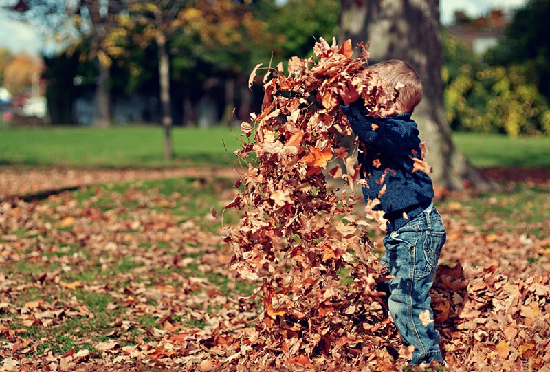 Autumn Home Maintenance Tasks