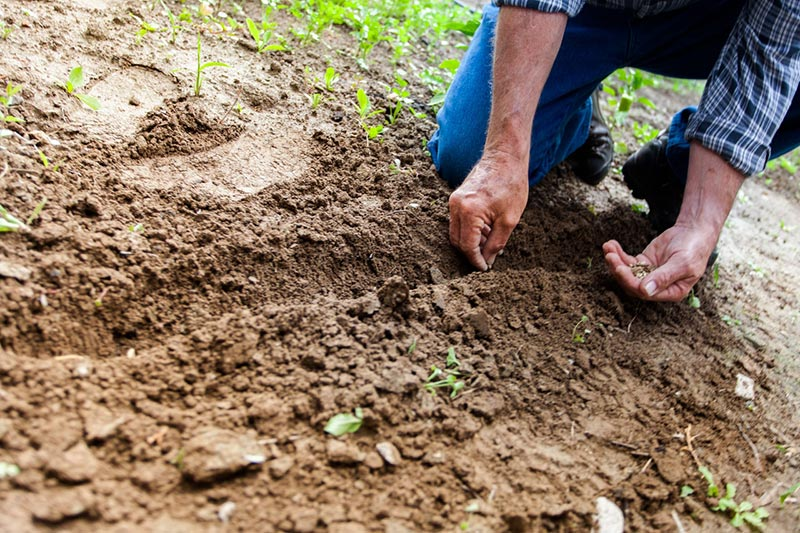 Don't Make These Gardening Mistakes