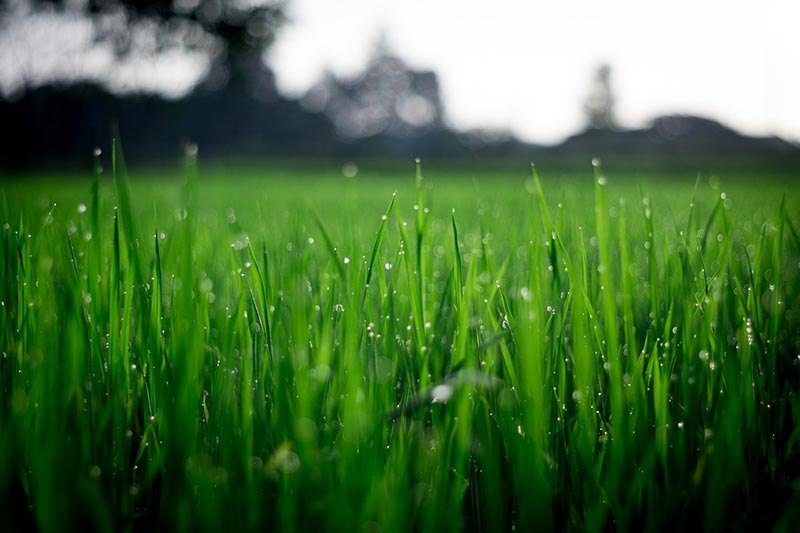 How Much Should You Water Your Lawn? Illinois